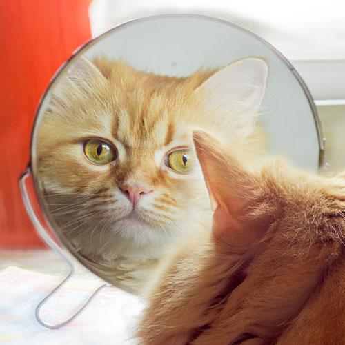 Cat Looking in Mirror 1x1