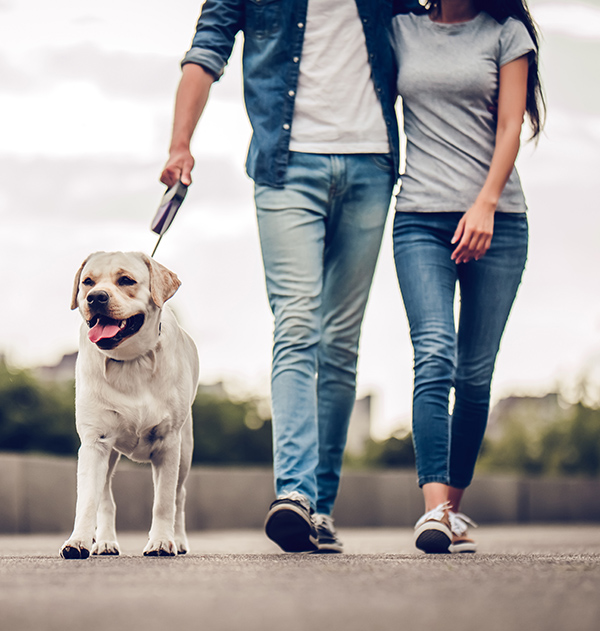 Couple walking yellow lab on leash