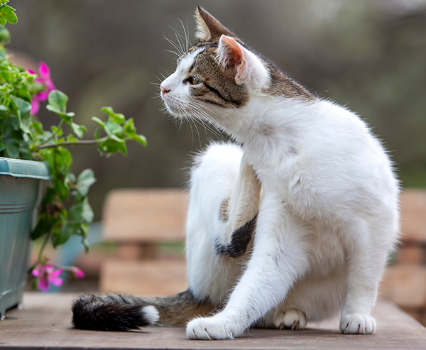 cat scratching next to a flower planter
