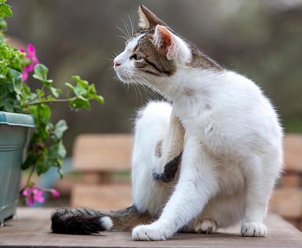 gato rascándose junto a una jardinera de flores