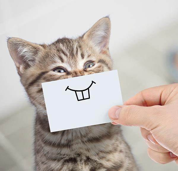 cat with cartoon teeth