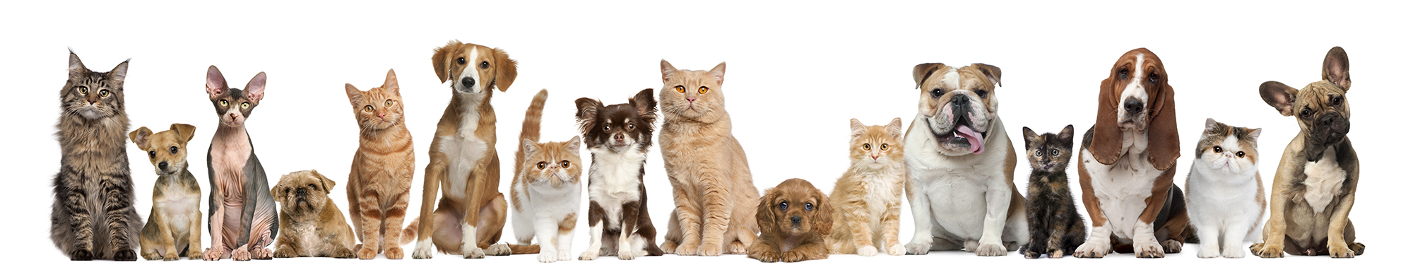 small dogs and cats on white background
